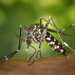 Natural Ways to Get Rid of Excess Mosquitoes